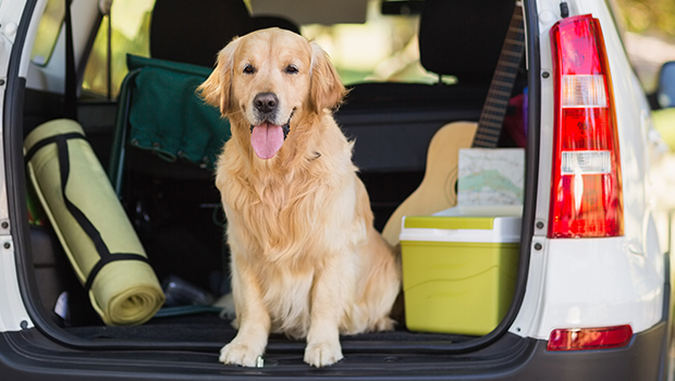 Vacation Planning Tips for Pet Owners