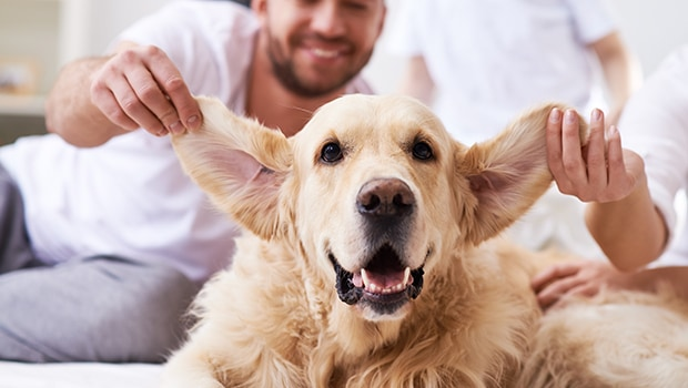 How to Clean Yor Pet's Ears