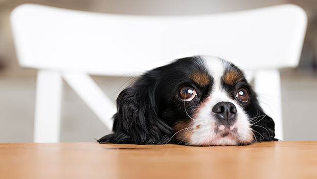 How to Stop These Bad Habits in Pets