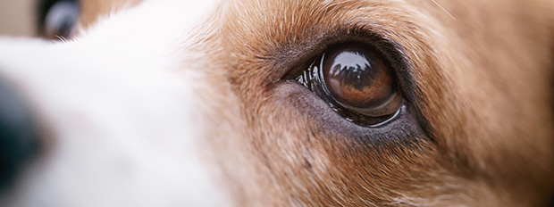 See the World Through Your Dog's Eyes
