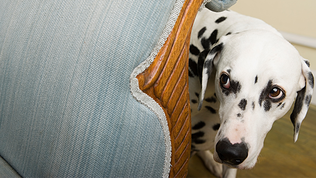 Is Your Pet Neurotic?