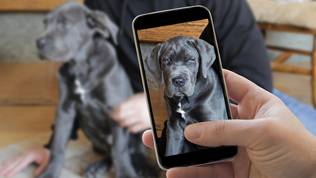 How to Take Better Pet Pictures & Videos
