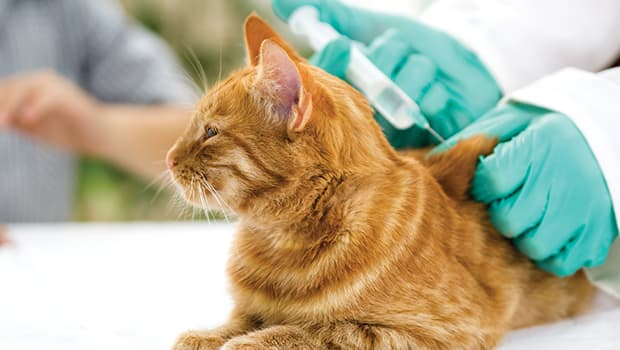 Diabetes Isn't a Death Sentence: The Ease of Caring for a Diabetic Pet