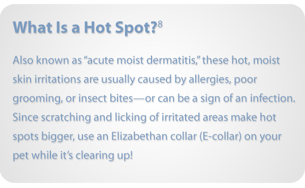 Definition of Acute Moist Dermatitis