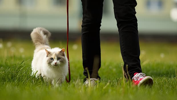 Walk Your New Cat Right Into Your Life