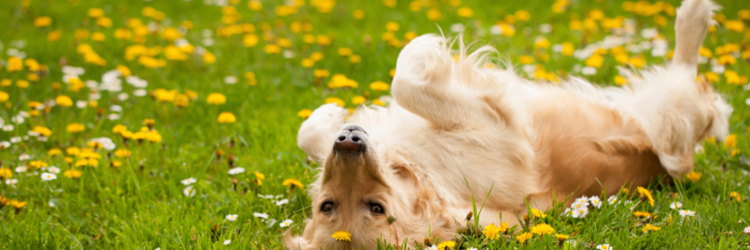 September Is Dog Tick Season Tick Treatment For Cats Amp Dogs