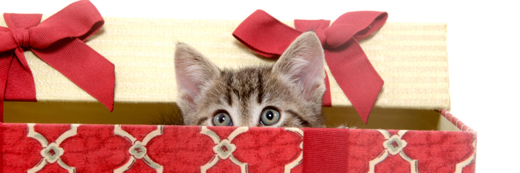 Cat Holiday Box