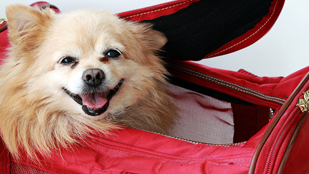 How to Travel Internationally With Your Pet