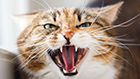 Understanding Cat Aggression
