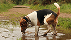 What Every Dog Owner Should Know about Leptospirosis