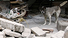 Dog in Rubble