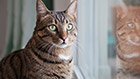 Fact or Fiction? Dispelling Myths of Flea & Tick Risk for Cats